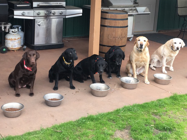 Dogs at Sand Pine Pheasants